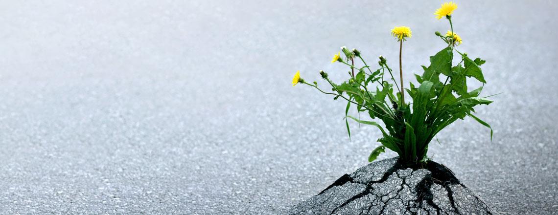 neues-leben_pflanze_asphalt_lebenskraft_deposit_12140x440.jpg