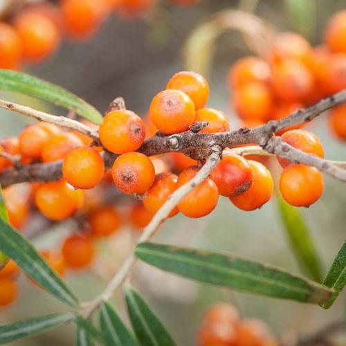 Sandorn Vitalstoffe Antioxidantien Grippenschutz
