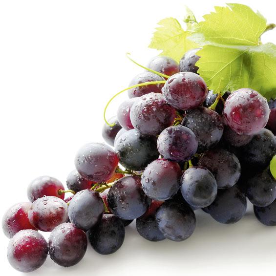 opc_traubenkernextrakt_antioxidantien_vital